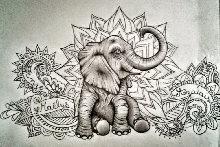Disegni da ricopiare facili e belli, disegno di un elefante, abbozzi di fiori