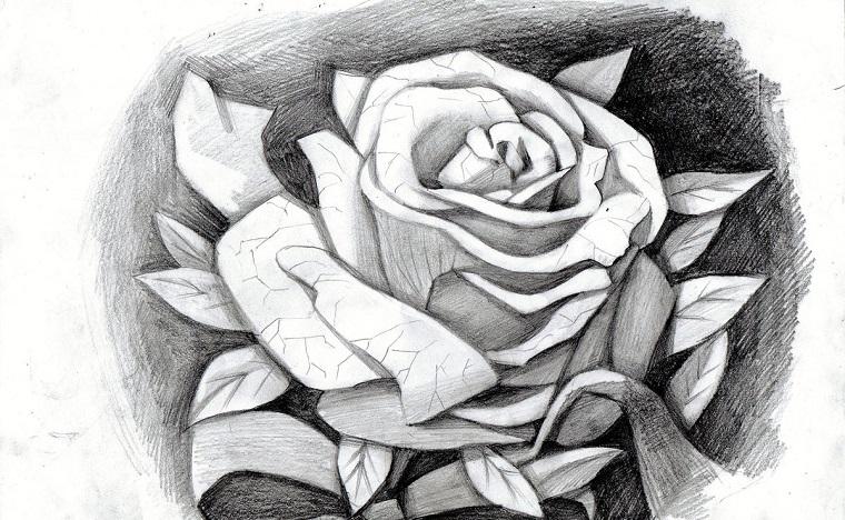 Disegno a matita di una rosa, petali con spezzature, sfondo immagine scuro