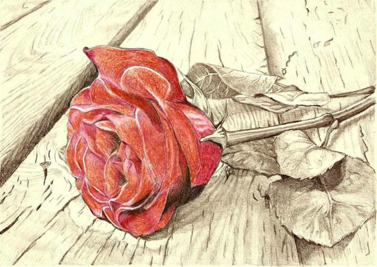 Disegno di una rosa, petali di colore rosso, rosa sul pavimento