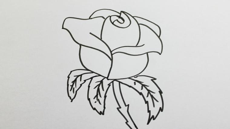 Come disegnare fiori realistici, rosa da colorare, schizzo su foglio bianco