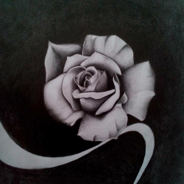 Rose disegnate, disegno di una rosa, punti di luce sui petali