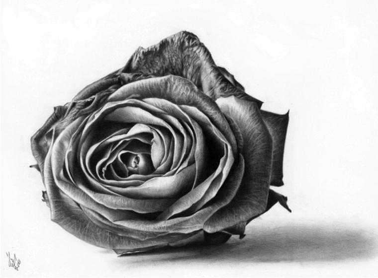Fiori facili da disegnare, un fiore per terra, punti di luce sui petali