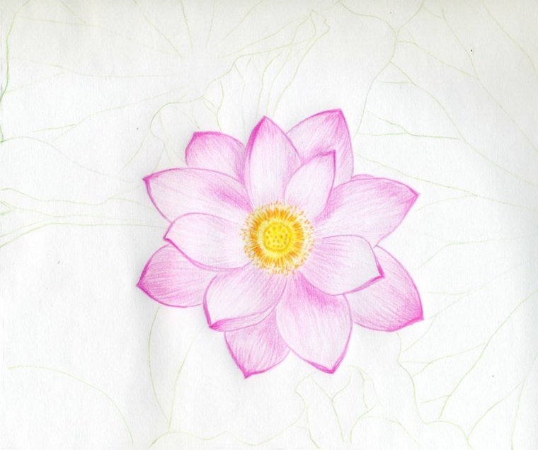 Fiori facili da disegnare, disegno di un fiore, petali di colore rosa
