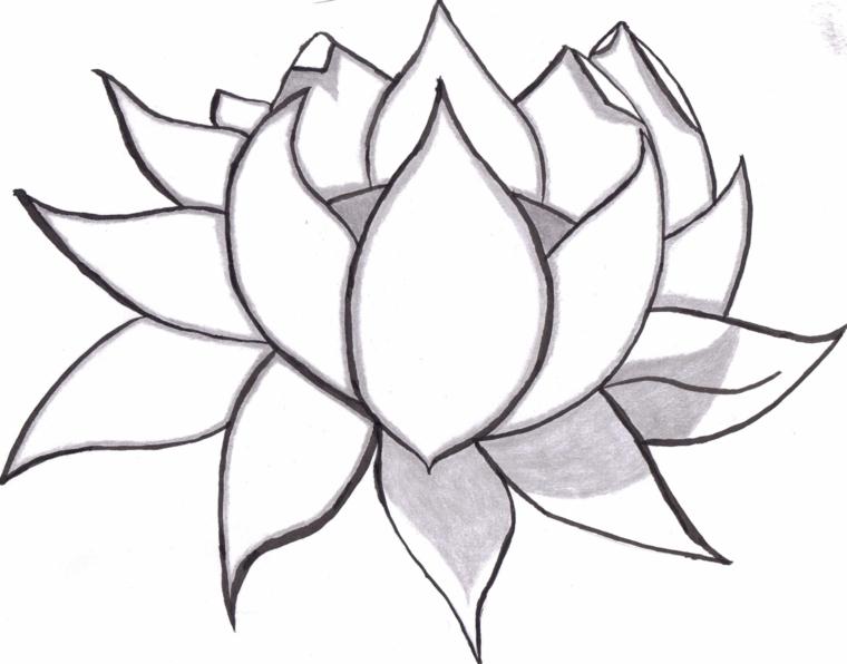 Cose facili da disegnare, fiore di loto, disegno a matita