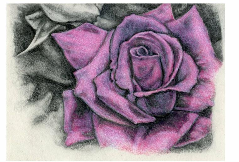 Disegno colorato con matite, rosa di colore viola, rose disegnate