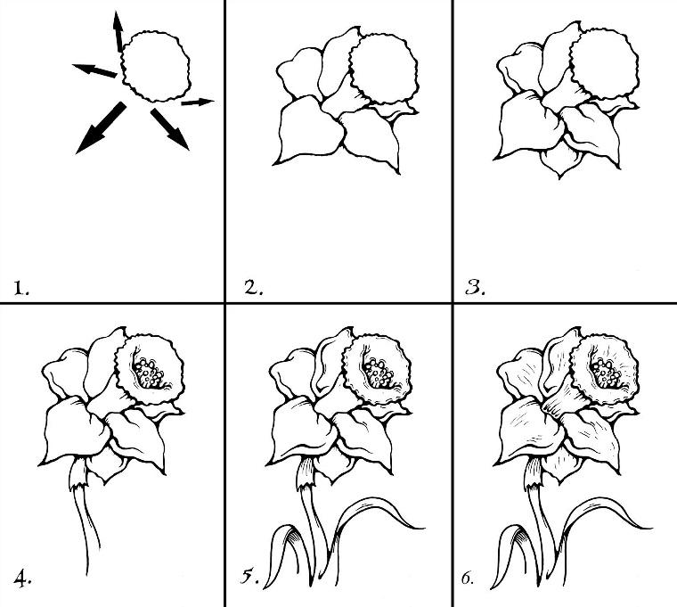 Imparare a disegnare, come si disegnare un fiore, abbozzo a matita