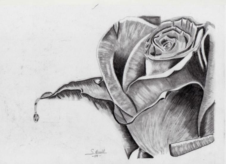 Come disegnare fiori realistici, rosa con sfumature, disegno firmato