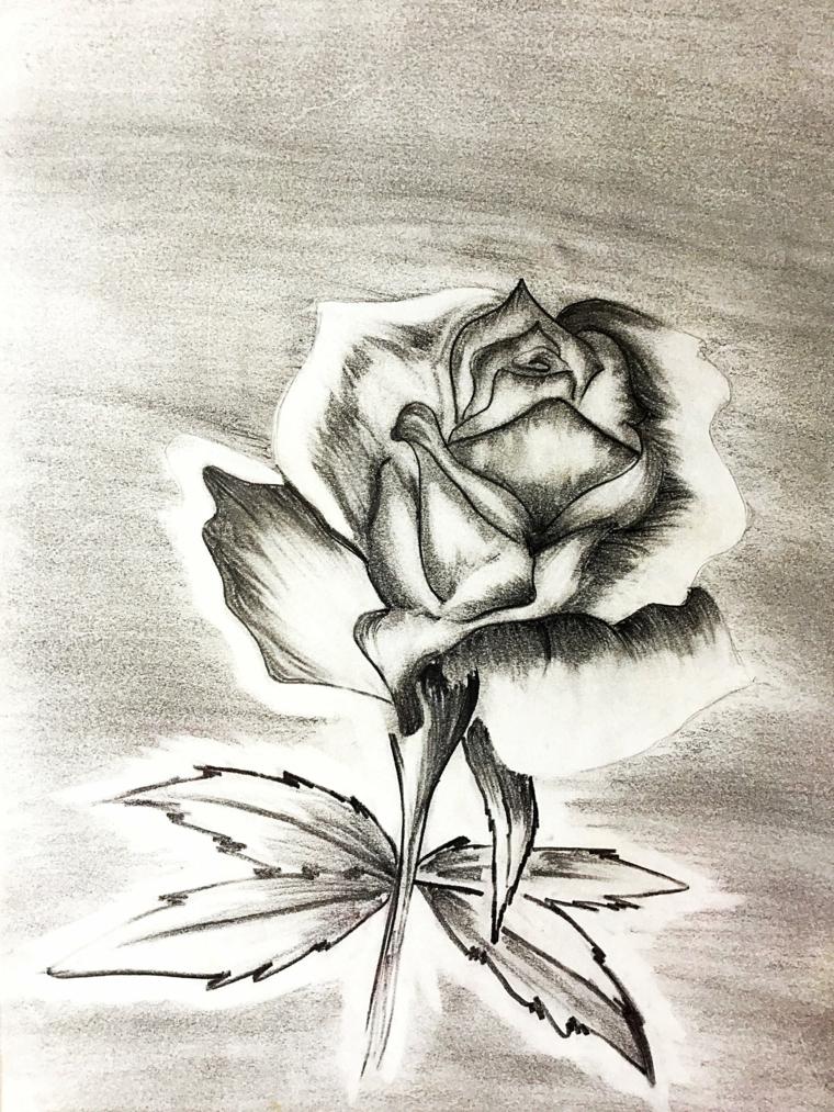 Disegni facili da disegnare a mano libera, punti di luce sui petali, schizzo di una rosa