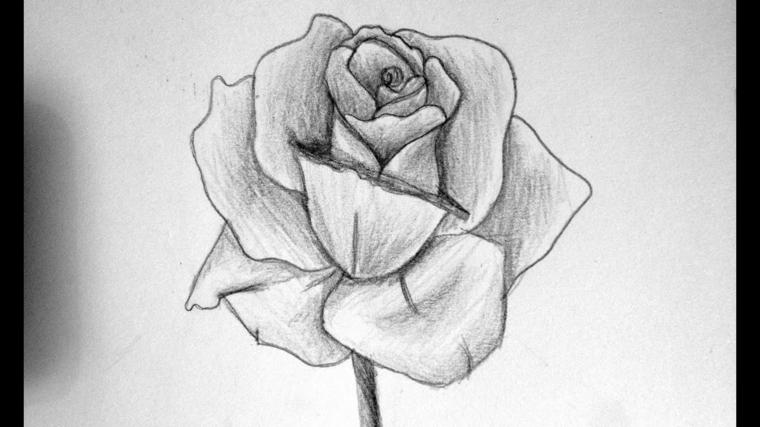 Disegni di fiori a matita, rosa con punti di luce, schizzo su foglio ruvido