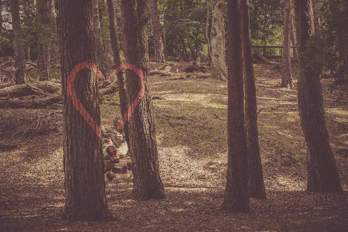 Disegno colorato di una foresta, foresta con alberi, foto wallpaper tablet