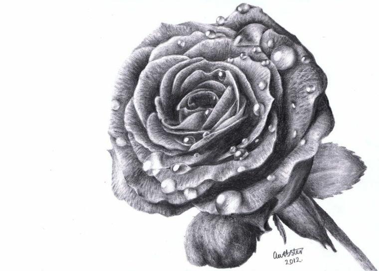 Disegno firmato, disegno rosa stilizzata, gocce d'acqua sui petali