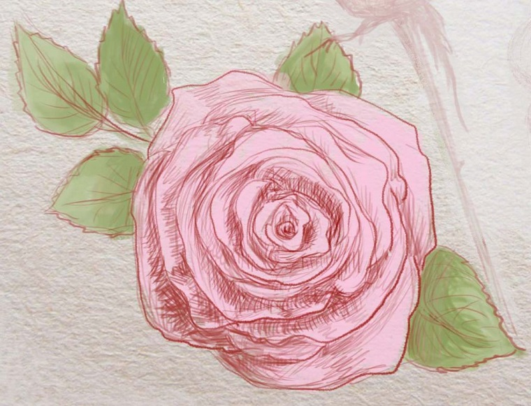 Foglio bianco ruvido, rosa con petali rossi, foglie verdi, disegni di fiori a matita