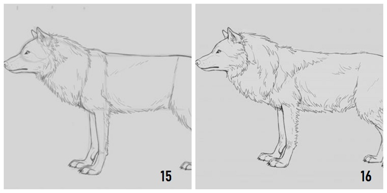 Immagini da ricopiare, disegno di un lupo, disegnare con la matita