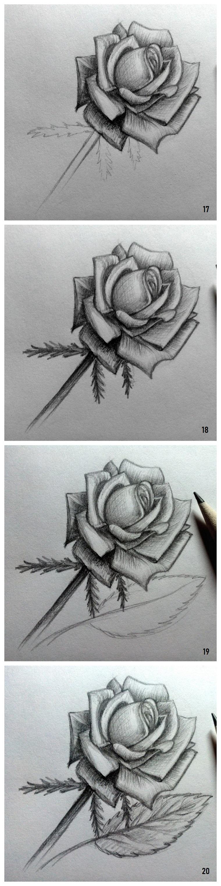 Immagini belle da disegnare, disegno di una rosa, tutorial con passaggi