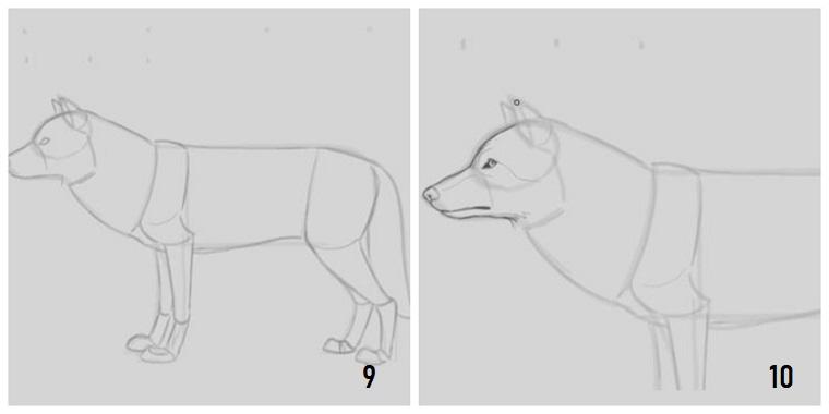 Disegni belli ma facili, tutorial con passaggi, come disegnare un lupo