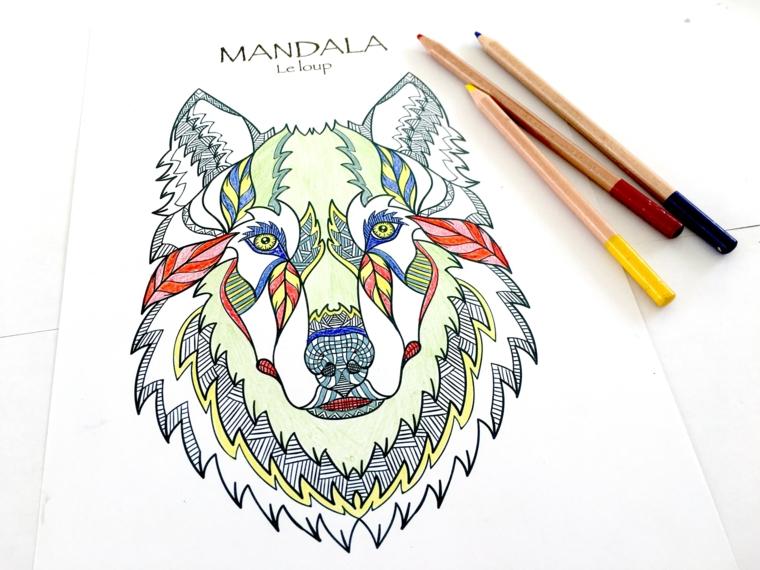 Disegni difficili da colorare, disegno di un lupo, matite colorate