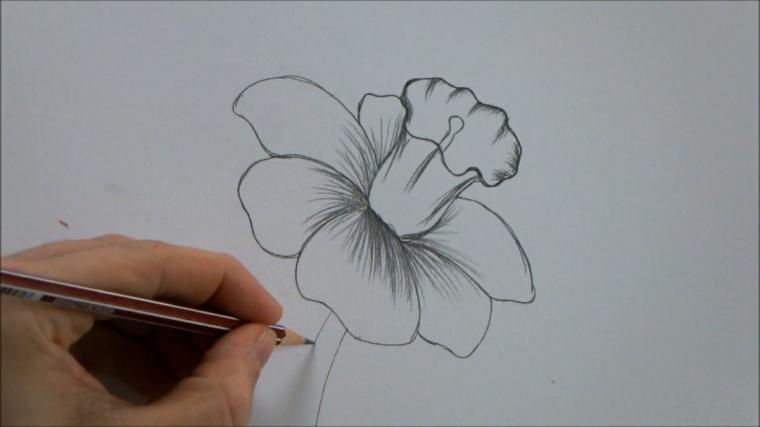 Fiori facili da disegnare, schizzo a matita, fiore con petali