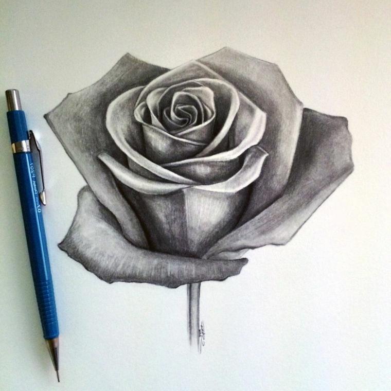 Schizzo a matita di una rosa, disegno su un foglio bianco, petali con punti di luce