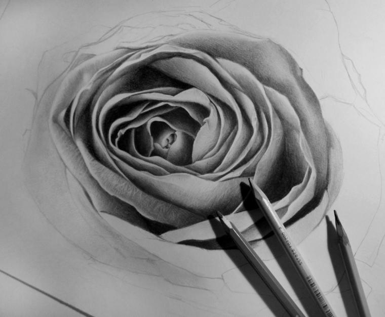 Disegno con le matite, schizzo di una rosa, rosa con petali sfumati