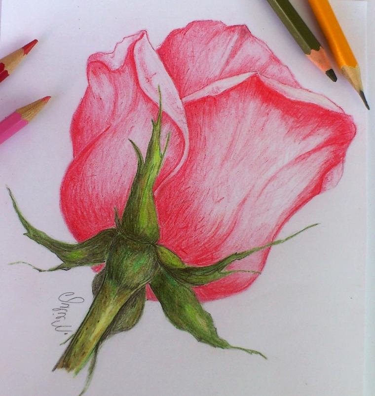 Matite colorate, disegno rosa stilizata, petali di colore rosa, stelo fiore verde
