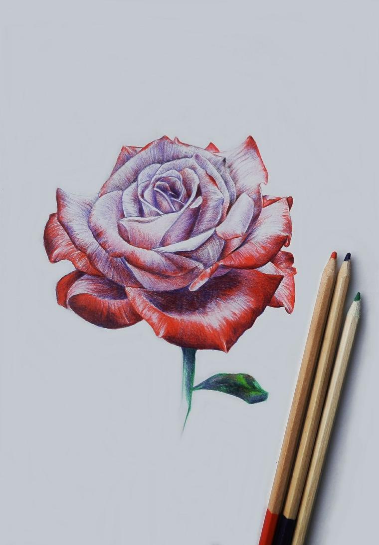 Matite di legno colorate, rosa di colore rosso, come disegnare una rosa
