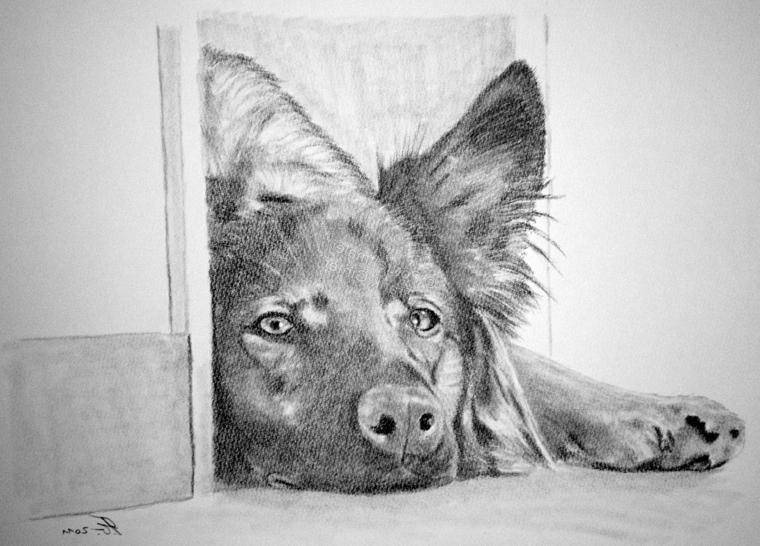 Schizzo a matita, disegno di un cane, chiaro scuro con matita