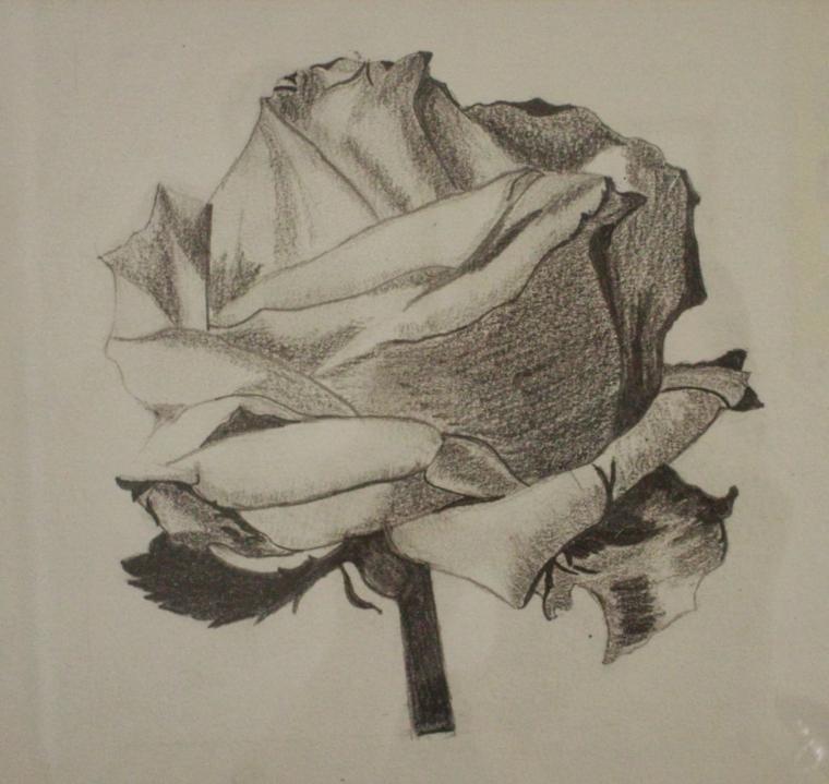 Fiori facili da disegnare, ombreggiatura con matita, schizzo con matita