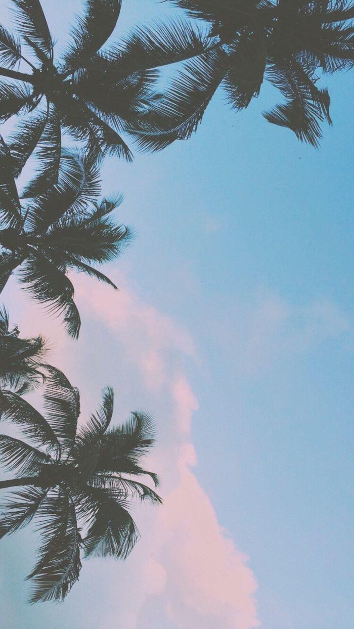 Sfondo per cellulare, fotografia di palme, cielo colore blu