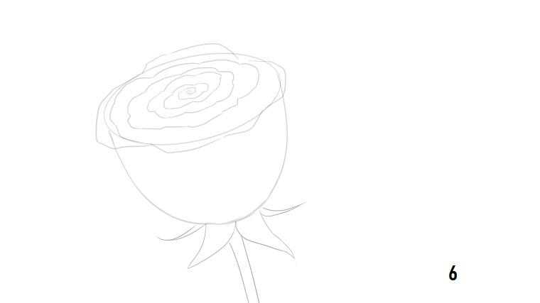 Come disegnare una rosa, disegno a matita, schizzo di un fiore