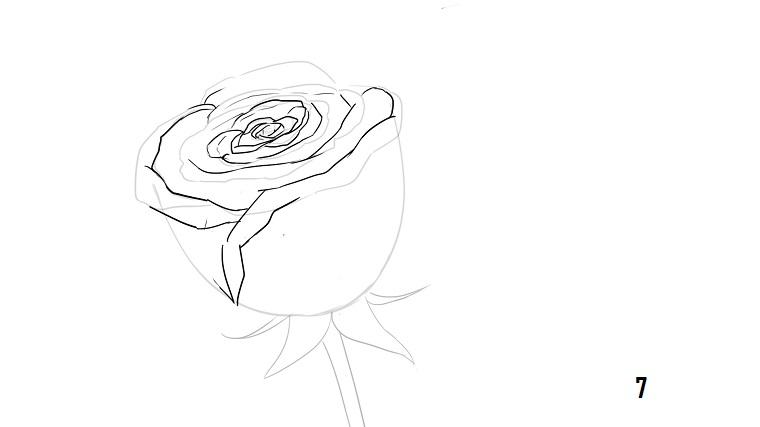 Schizzo A Matita Disegno Di Una Rosa Stelo Con Foglie Fai Da Te