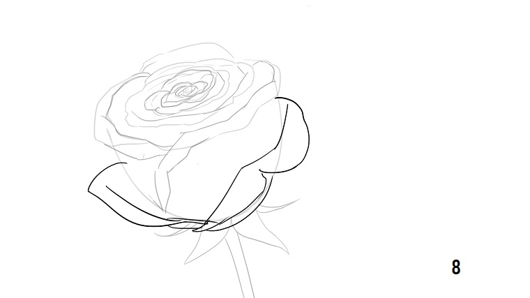 Disegno rosa stilizzata, schizzo dei petali, abbozzo a matita