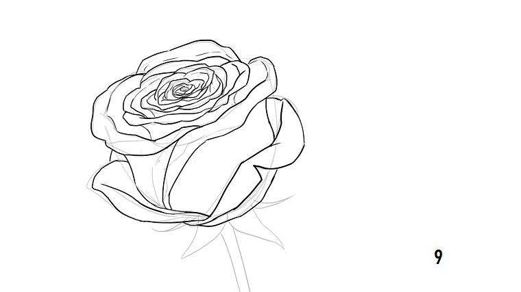 Come disegnare fiori realistici, disegno di una rosa, abbozzo a matita