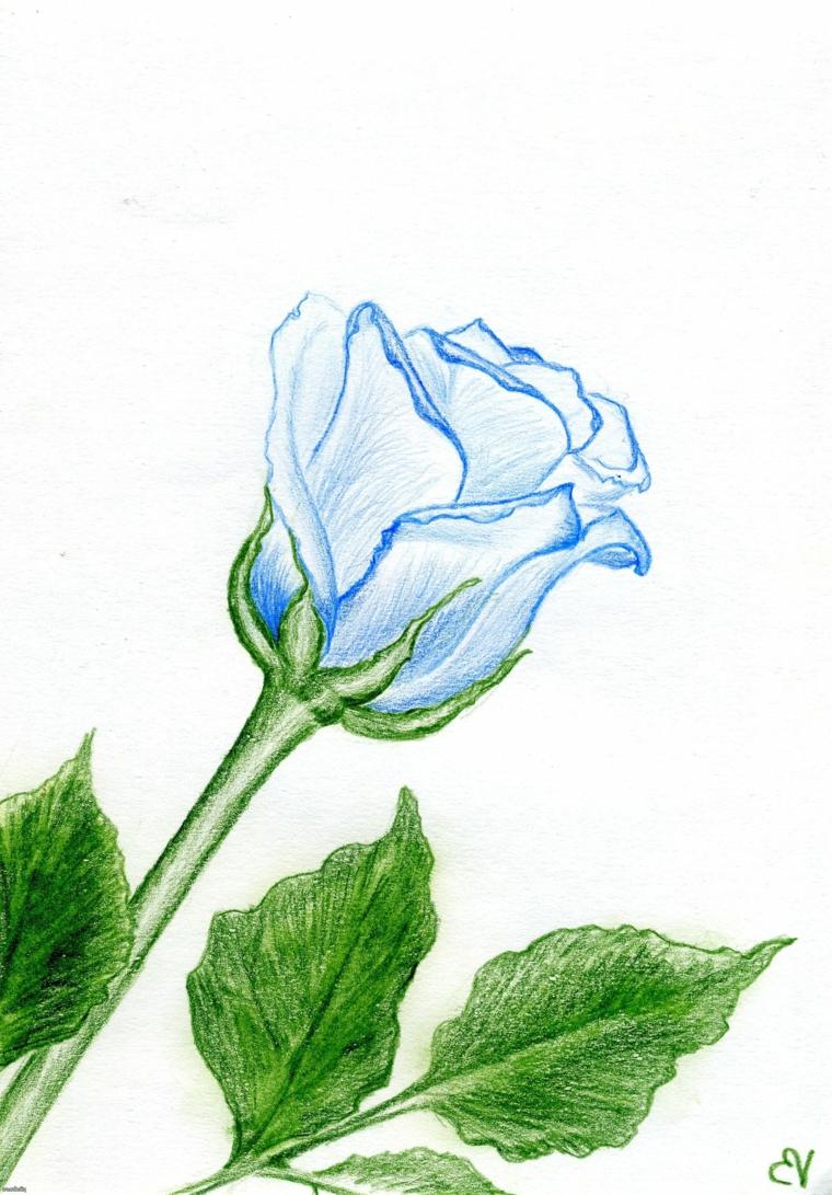 Disegno con matite colorate, una rosa con petali blu, foglie verdi