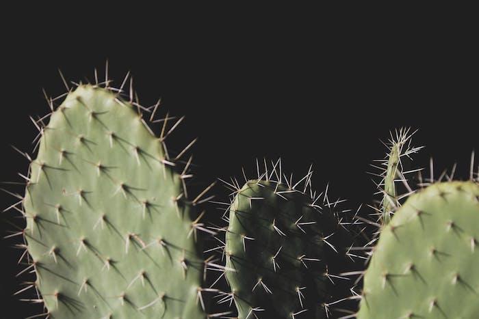 Effetti foto stile tumblr, foto di piante grasse