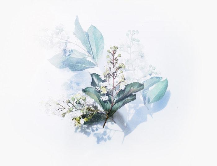 Disegno ad acquarelli di un fiore, sfondo immagine bianca, fotografia per wallpaper