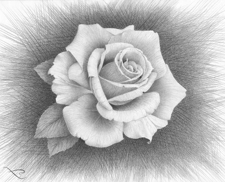 Sfondo immagine scuro, disegno di una rosa, schizzo a matita