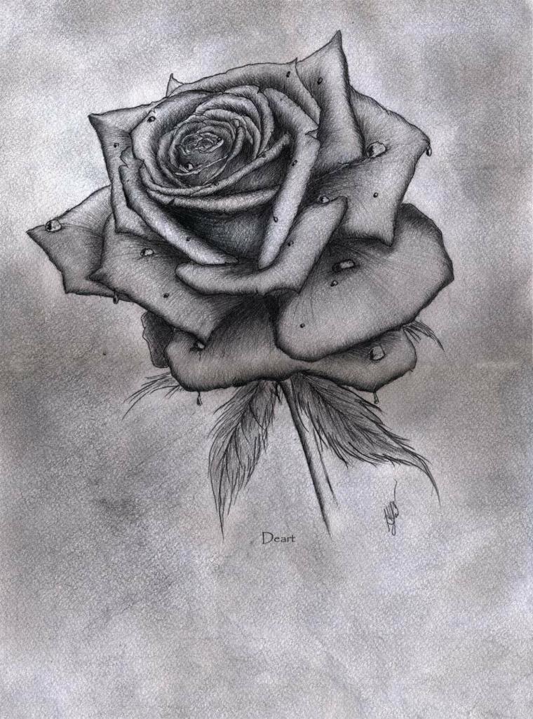 Rosa con gocce d'acqua, disegno di una rosa, sfumature con matita