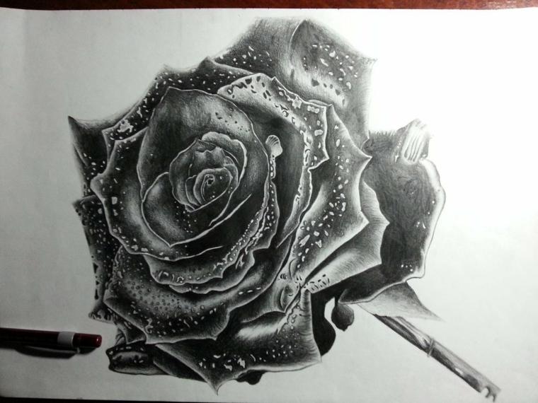 Fiore con petali nero, disegno di una rosa, schizzo a matita