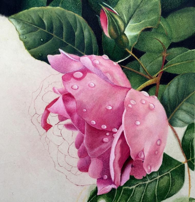 Disegni facili da disegnare a mano libera, rosa con gocce d'acqua