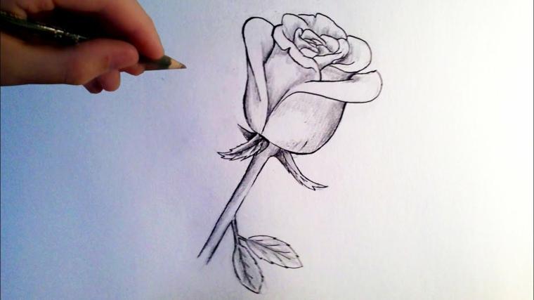 Schizzo a matita, disegno su un foglio bianco, abbozzo di una rosa