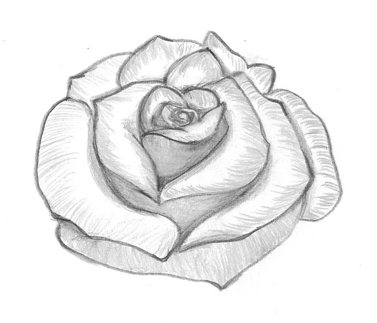 Fiori facili da disegnare, sfumature e punti di luce, petali di rosa