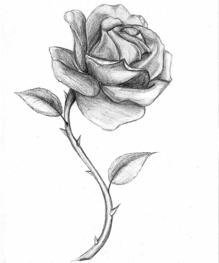 Schizzo rosa con spine, ombreggiatura con matita
