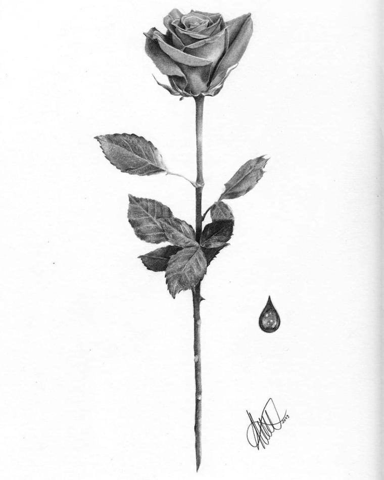 Schizzo a matita, disegno di una rosa, stelo con foglie