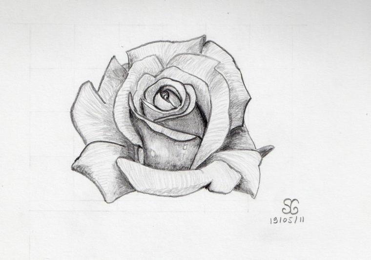 Disegno di una rosa, sfumature sulle foglie, schizzo di un fiore