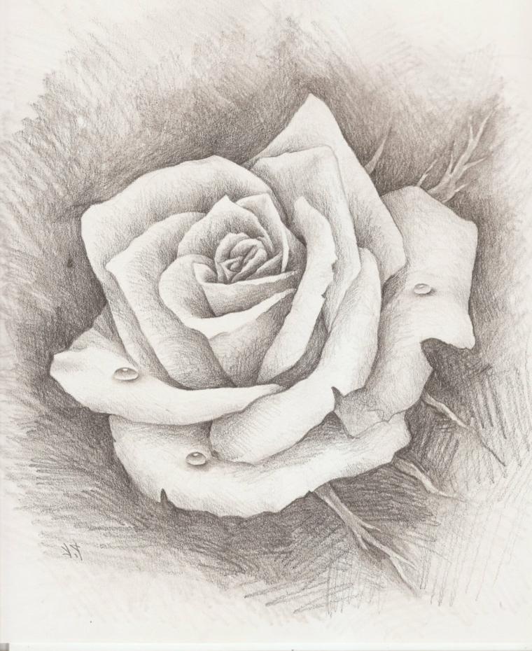 Schizzo di un fiore, rosa con petali chiari, sfumature con matita