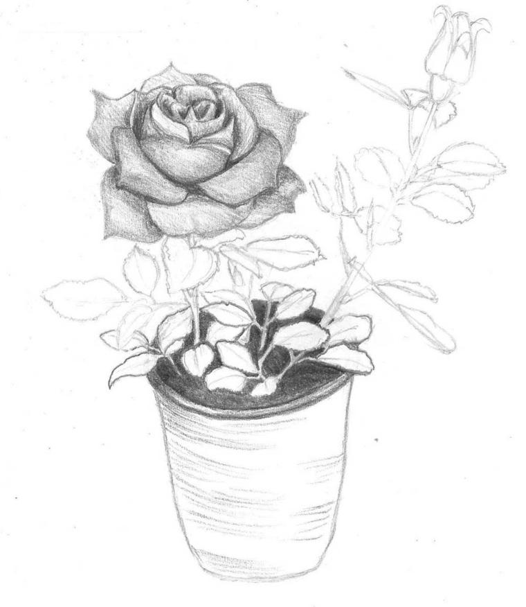 Abbozzo a matita, disegno di un vaso, vaso con rosa