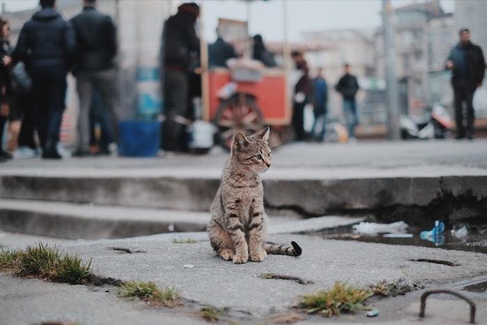 Gattino in strada, fotografia di un gatto, wallpaper per il cellulare