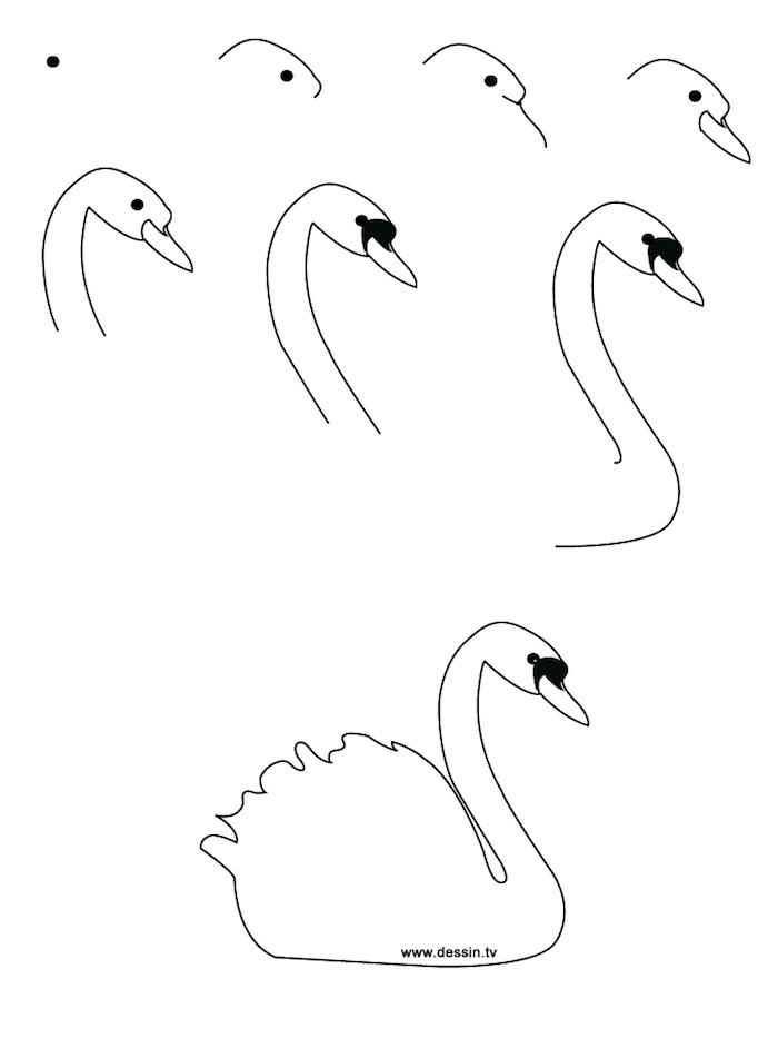 Come disegnare un cigno, disegno a matita, schizzo a matita di un animale