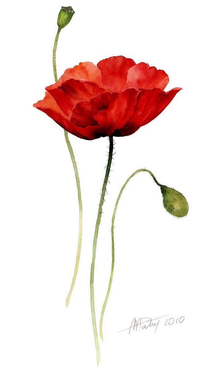 Dipinto di un fiore, fiore con petali rossi, disegno di un fiore, schizzo con colori acquarello