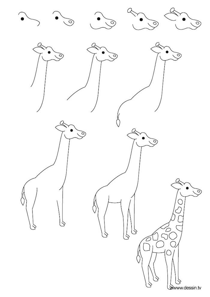 Come disegnare una giraffa, tutorial per disegno a matita, passaggi da seguire